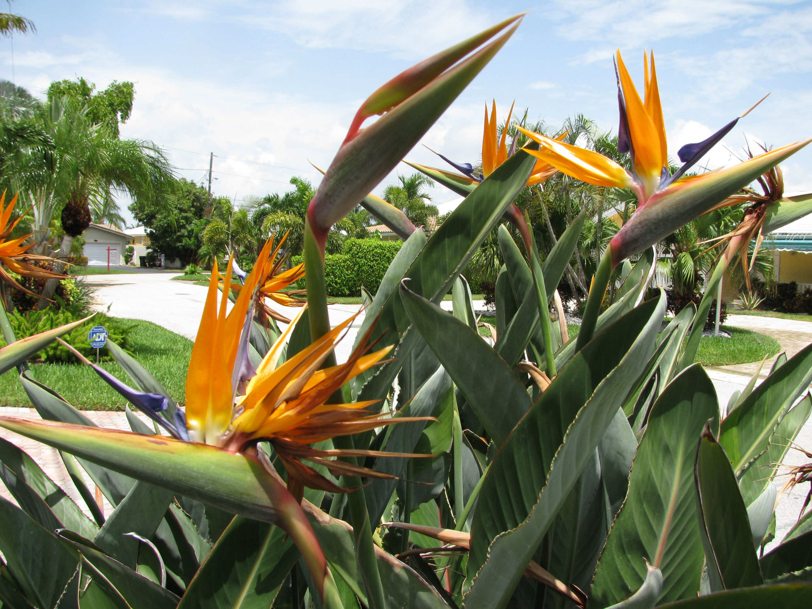 Thereafter Blooming Improves Yearly