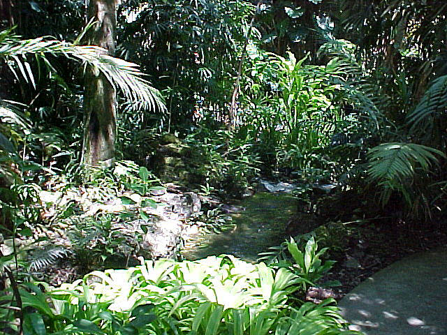 Jungle mini garden ideas photograph small backyard landsca for Jungle garden design ideas