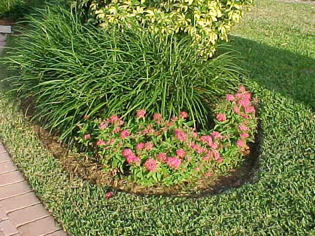 Tropical Ground Covers Sub Tropical Ground Covers List