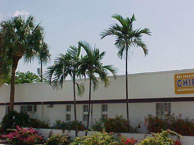 Solitaire Palm Ptychosperma Elegans Article