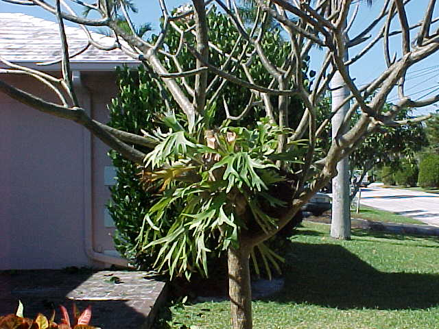 how to take care of plumeria in the winter