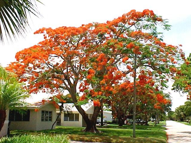 الاشجار سريعة النموRapid growing trees