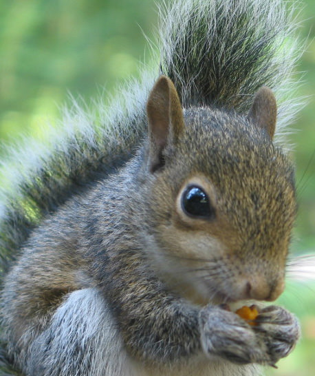 Fruit and nut trees: How to stop squirrels from eating all your ...