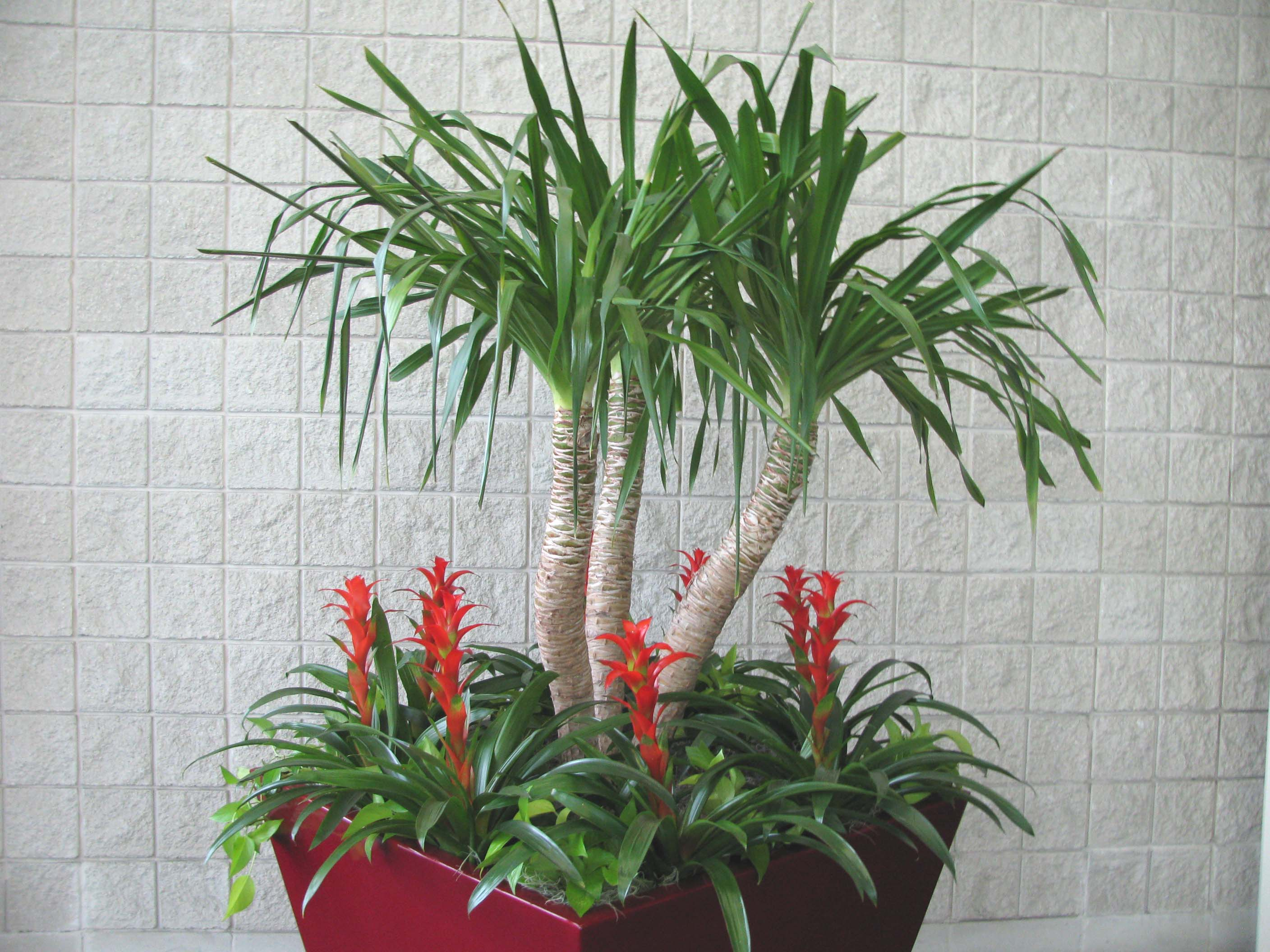 "how to"" for your indoor plants, links, pictures and articles"